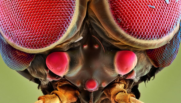 Beyond the radar of the human eye: mysterious creatures captured by Swiss photographer.
